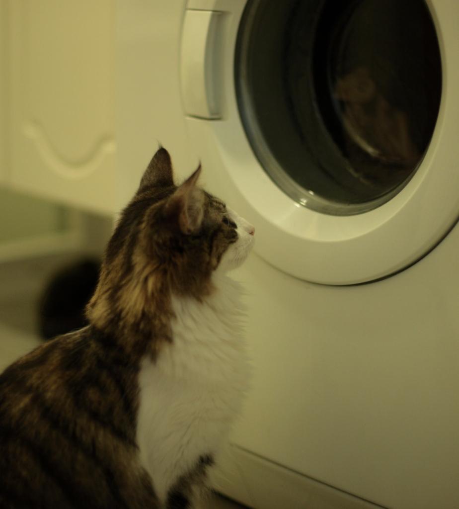 Cat-TV